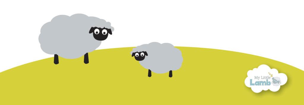 lambs in the field